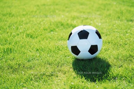 芝生の上のサッカーボール FYI00969504