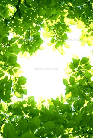 新緑 FYI00970349