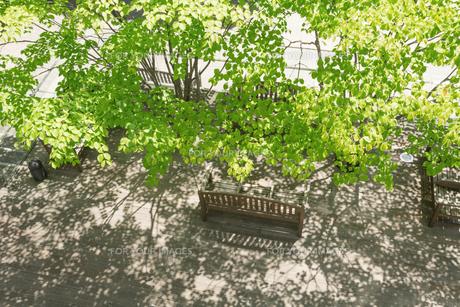 都心の新緑と木陰 FYI00975306