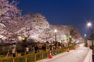 ライトアップされた千鳥ヶ淵の桜 FYI00976117