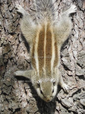 木につかまっているリス FYI00986340