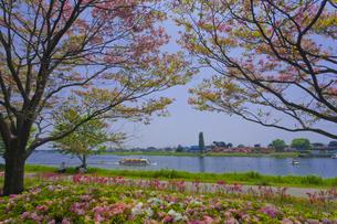 群馬県立つつじが岡公園と城沼を望む FYI01010687