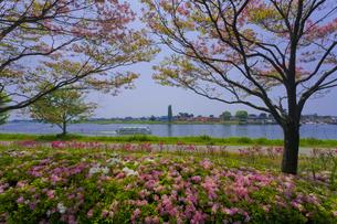 群馬県立つつじが岡公園と城沼を望む FYI01010825