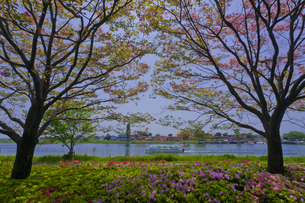 群馬県立つつじが岡公園と城沼を望む FYI01010875