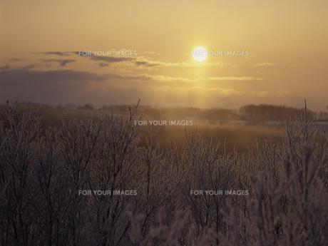 霧氷と朝日 FYI01014947