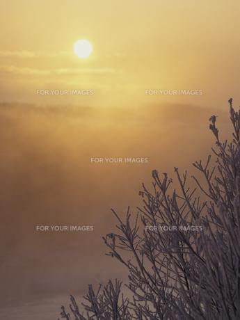霧氷と朝日 FYI01015022