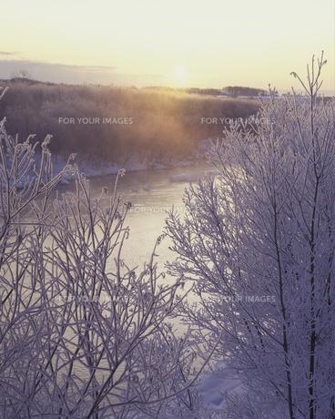 霧氷と朝日 FYI01015117