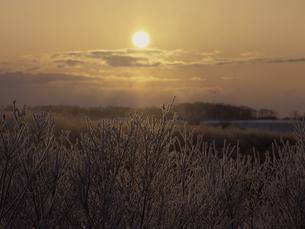 霧氷と朝日 FYI01015156