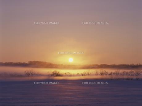 雪原と朝日 FYI01015487