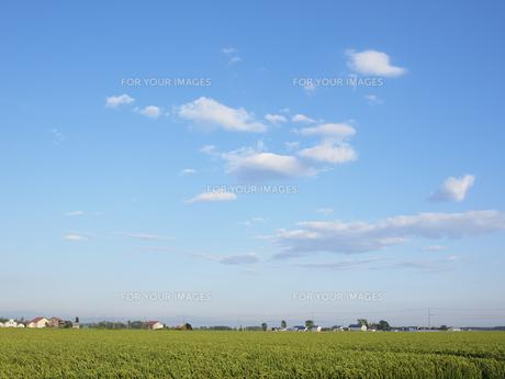 稲穂と空 FYI01015510