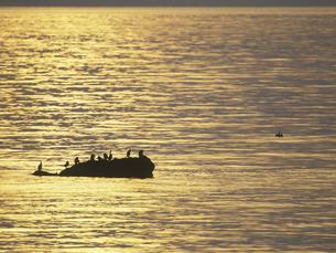 光る海と鳥 FYI01015527