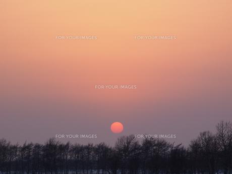 夕日 FYI01015528