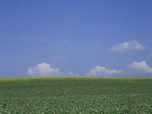 ジャガイモ畑と空 FYI01015530