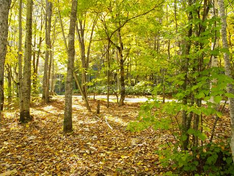 秋の公園 FYI01015535
