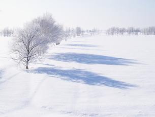霧氷と雪原 FYI01015542