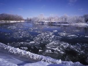 蓮葉氷が流れる釧路湿原の川 FYI01015546