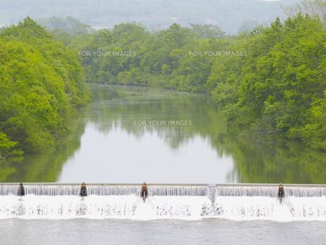 川と新緑 FYI01015566