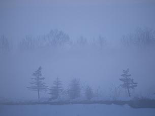 朝霧 FYI01015572