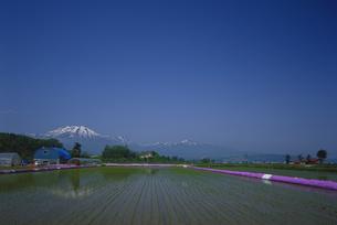 水田のシバザクラとニセコの山々 FYI01015591