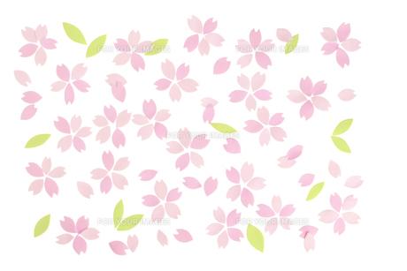 桜の花びらの春イメージ FYI01016637