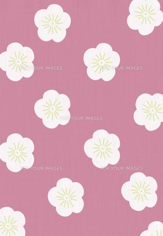 梅の花のコラージュ FYI01017398
