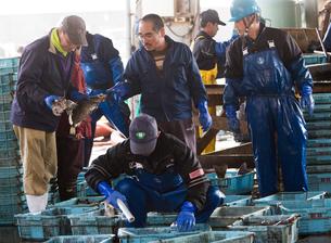 作業する漁師 FYI01030387