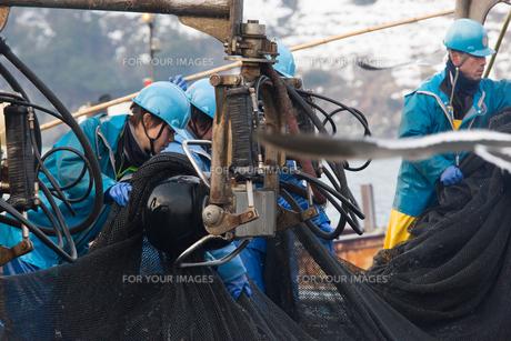 漁師 FYI01030390