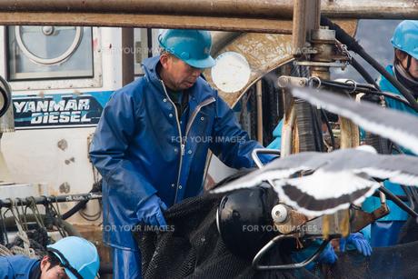 漁師 FYI01030394