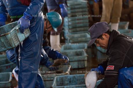 漁師 FYI01030443