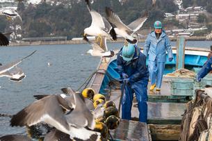 作業する漁師 FYI01030445