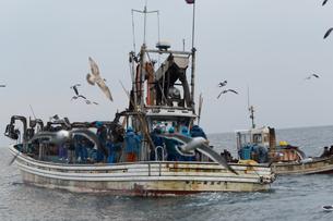 漁師 FYI01030457