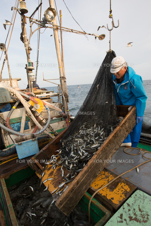 定置網漁の男性 FYI01030556