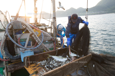 定置網漁の男性 FYI01030583