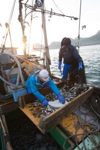定置網漁の男性 FYI01030592