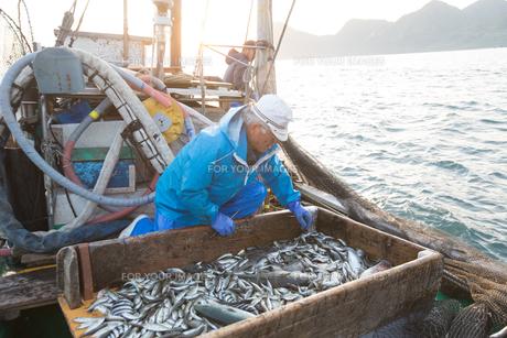 定置網漁の男性 FYI01030593