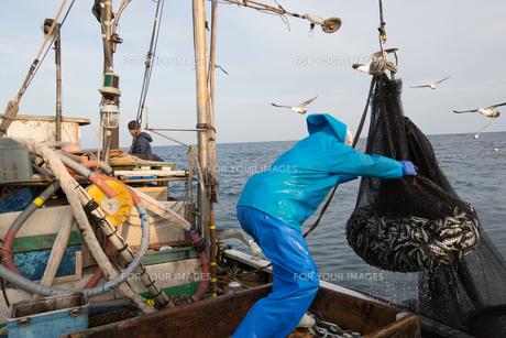 定置網漁の男性 FYI01030618