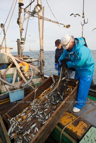 定置網漁の男性 FYI01030631