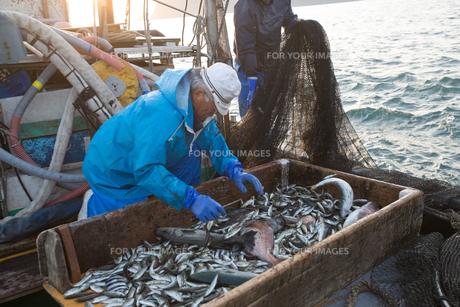 定置網漁の男性 FYI01030633