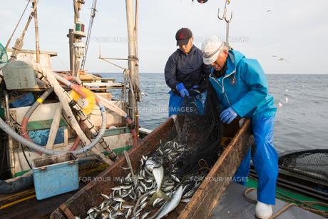 定置網漁の男性 FYI01030636