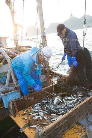 定置網漁の男性 FYI01030663