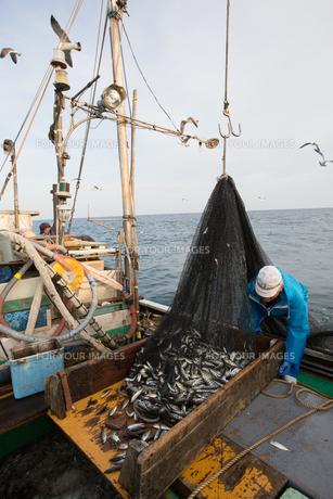 定置網漁の男性 FYI01030676