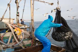 定置網漁の男性 FYI01030679