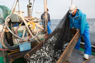 定置網漁の男性 FYI01030686