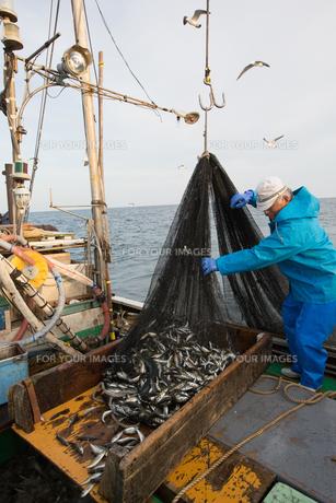 定置網漁の男性 FYI01030699