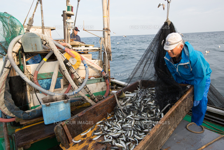 定置網漁の男性 FYI01030707