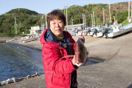 漁港で魚を持つ女将 FYI01030709