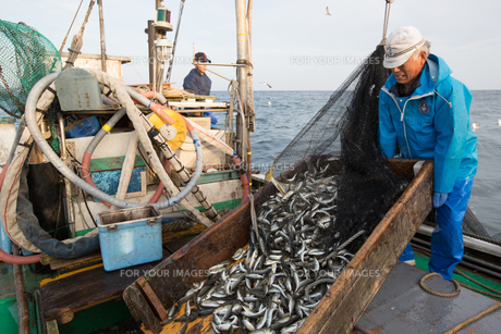 定置網漁の男性の素材 [FYI01030754]