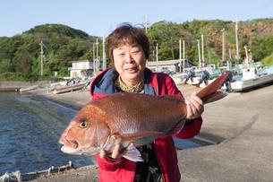 漁港で魚を持つ女将 FYI01030769