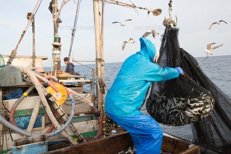 定置網漁の男性 FYI01030786
