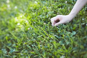 シロツメグサを摘む女性 FYI01033239